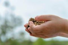 Χέρια Childs με τη χούφτα της γης Στοκ φωτογραφία με δικαίωμα ελεύθερης χρήσης