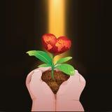 Χέρια Childs που κρατούν ένα μικρό κόκκινο δέντρο καρδιών Ελεύθερη απεικόνιση δικαιώματος