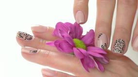 Χέρια Manicured ήπια σχετικά με το λουλούδι απόθεμα βίντεο