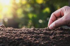 χέρι αγροτών που φυτεύει το φασόλι του κολοκυθιού στο φυτικό κήπο με στοκ εικόνες με δικαίωμα ελεύθερης χρήσης