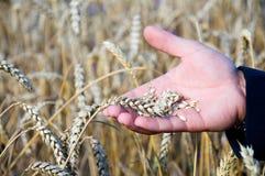 Χέρι αγροτών Στοκ Εικόνες