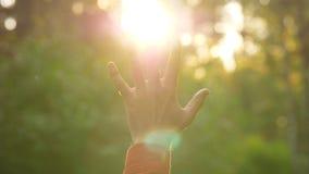 Χέρι ατόμων risw στο όμορφο φως ήλιων φιλμ μικρού μήκους