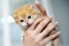 χέρι γατών Στοκ Φωτογραφίες