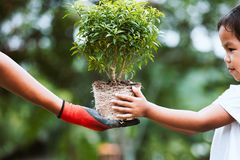 Χέρι γονέα που φορά το γάντι που δίνει το νέο δέντρο σε ένα παιδί Στοκ φωτογραφία με δικαίωμα ελεύθερης χρήσης