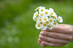 Χέρι γυναίκας με camomile τη θερινή ημέρα Στοκ Εικόνες