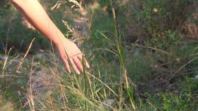 Χέρι γυναίκας σχετικά με τη χλόη σε σε αργή κίνηση φιλμ μικρού μήκους