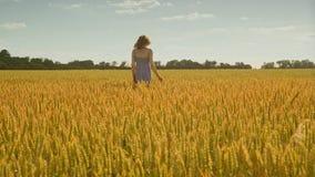Χέρι γυναικών σχετικά με τον τομέα σίτου Γυναίκα που περπατά μακριά στο γεωργικό τομέα απόθεμα βίντεο