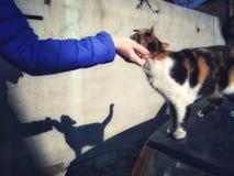 Χέρι ενός ατόμου που κτυπά μια γάτα Στοκ εικόνα με δικαίωμα ελεύθερης χρήσης