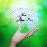 Χέρι ιατρών που παρουσιάζει στο τρισδιάστατο γυαλί ανθρώπινο εγκέφαλο Στοκ Εικόνες