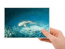 Χέρι και εικόνα & x28 καρχαριών το photo& μου x29  Στοκ εικόνα με δικαίωμα ελεύθερης χρήσης