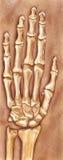 Χέρι και καρπός - που θάβονται στο ρύπο και που ανασκάπτονται στοκ εικόνα με δικαίωμα ελεύθερης χρήσης