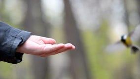Χέρι και μικρά πουλιά φιλμ μικρού μήκους