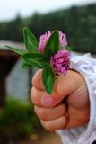 Χέρι και λουλούδια στοκ εικόνες