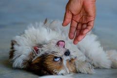Χέρι και σκυλί Στοκ Εικόνες