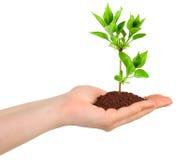 Χέρι και φυτό στοκ φωτογραφίες