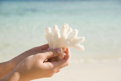 χέρι κοραλλιών Στοκ Φωτογραφία