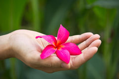 χέρι λουλουδιών Στοκ Εικόνες