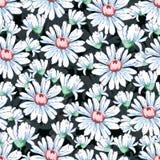 Χέρι λουλουδιών Chamomile που σύρει το άνευ ραφής σχέδιο, διανυσματικό floral υπόβαθρο, floral διακόσμηση κεντητικής Συρμένο λευκ Στοκ Εικόνες