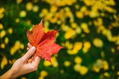 Χέρι με το κόκκινο φύλλο Στοκ φωτογραφία με δικαίωμα ελεύθερης χρήσης