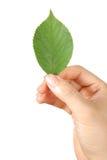 Χέρι με το πράσινο leaf  Στοκ φωτογραφία με δικαίωμα ελεύθερης χρήσης
