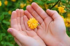 Χέρι με camomile Στοκ Εικόνες
