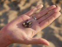 Χέρι μιας γυναίκας με το δαχτυλίδι και μιας ομάδας κοχυλιών θάλασσας με τη θολωμένη άμμο παραλιών στοκ εικόνες με δικαίωμα ελεύθερης χρήσης