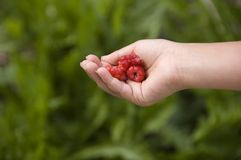 χέρι παιδιών rapsberry στοκ εικόνα