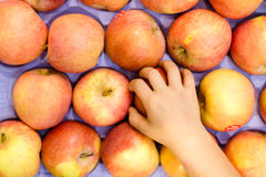 Χέρι παιδιού που παίρνει το κόκκινο μήλο από το σύνολο επίδειξης Στοκ εικόνα με δικαίωμα ελεύθερης χρήσης