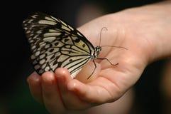 χέρι πεταλούδων Στοκ εικόνες με δικαίωμα ελεύθερης χρήσης