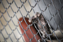 Χέρι πιθήκου στο κλουβί Στοκ Εικόνες
