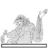 Χέρι πιθήκων langur που επισύρεται την προσοχή στο άσπρο υπόβαθρο Στοκ Φωτογραφία