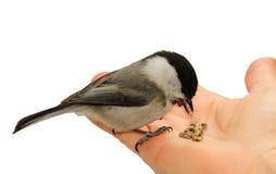 χέρι πουλιών Στοκ εικόνες με δικαίωμα ελεύθερης χρήσης