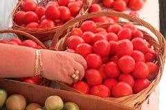Χέρι που επιλέγει τις ντομάτες Στοκ εικόνα με δικαίωμα ελεύθερης χρήσης