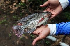 Χέρι που κρατά ένα μεγάλο φρέσκο ακατέργαστο ψάρι Στοκ Εικόνες