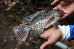 Χέρι που κρατά ένα μεγάλο φρέσκο ακατέργαστο ψάρι Στοκ φωτογραφία με δικαίωμα ελεύθερης χρήσης