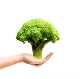 Χέρι που κρατά ένα brokkoli όπως ένα πράσινο δέντρο Στοκ εικόνες με δικαίωμα ελεύθερης χρήσης