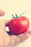 Χέρι που κρατά μια ντομάτα Στοκ φωτογραφία με δικαίωμα ελεύθερης χρήσης