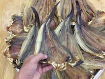 Χέρι που κρατά τα αποξηραμένα ψάρια Στοκ εικόνες με δικαίωμα ελεύθερης χρήσης