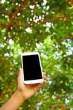 Χέρι που κρατά το άσπρο έξυπνο τηλέφωνο ή το κινητό τηλέφωνο με το υπόβαθρο φύσης Στοκ φωτογραφία με δικαίωμα ελεύθερης χρήσης