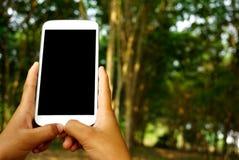 Χέρι που κρατά το άσπρο έξυπνο τηλέφωνο ή το κινητό τηλέφωνο με το υπόβαθρο φύσης Στοκ φωτογραφίες με δικαίωμα ελεύθερης χρήσης