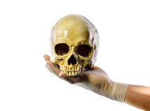Χέρι που κρατά το ανθρώπινο κρανίο στο άσπρο υπόβαθρο Στοκ Φωτογραφίες