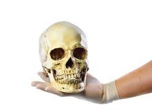 Χέρι που κρατά το ανθρώπινο κρανίο στο άσπρο υπόβαθρο Στοκ Εικόνες