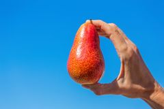 Χέρι που κρατά το κόκκινο αχλάδι στο μπλε ουρανό Στοκ Φωτογραφίες