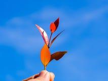 Χέρι που κρατά το κόκκινο φύλλο πέρα από το υπόβαθρο μπλε ουρανού Στοκ εικόνες με δικαίωμα ελεύθερης χρήσης