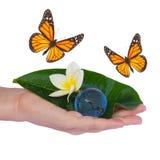 Χέρι που κρατά το πράσινες φύλλο και τη γη με τις πεταλούδες Στοκ φωτογραφία με δικαίωμα ελεύθερης χρήσης