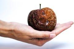 Χέρι που κρατά το σάπιο μήλο Στοκ εικόνα με δικαίωμα ελεύθερης χρήσης