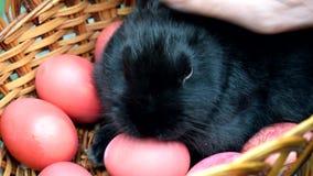 Χέρι που κτυπά λίγο μαύρο κουνέλι r Κουνέλι στο ψάθινο καλάθι, αυγά Πάσχας απόθεμα βίντεο