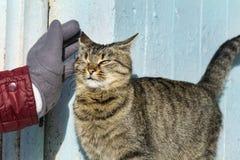 Χέρι που κτυπά μια γάτα Αγάπη Animals Στοκ Φωτογραφίες