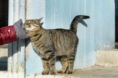 Χέρι που κτυπά μια γάτα Αγάπη Animals Στοκ εικόνα με δικαίωμα ελεύθερης χρήσης