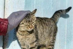 Χέρι που κτυπά μια γάτα Αγάπη Animals Στοκ Εικόνα